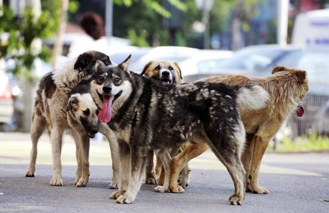 Soluţia americană la problema câinilor vagabonzi