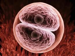 O manifestație pentru apărarea embrionului uman