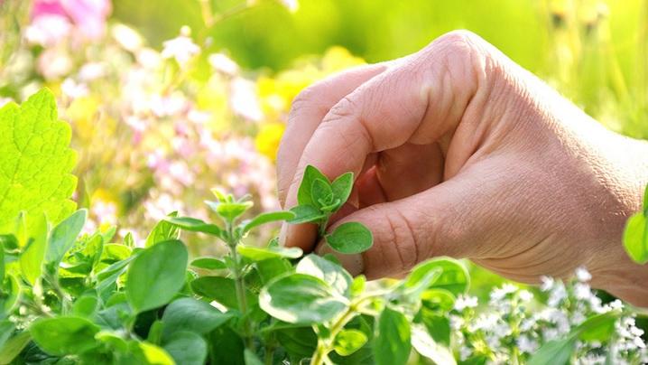 Zece plante medicinale recomandate de Sfânta Hildegard