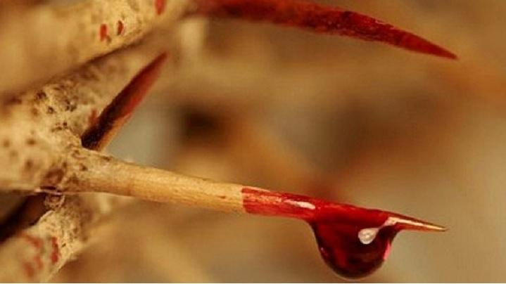 Sângele lui Cristos este izvor de mântuire pentru lume